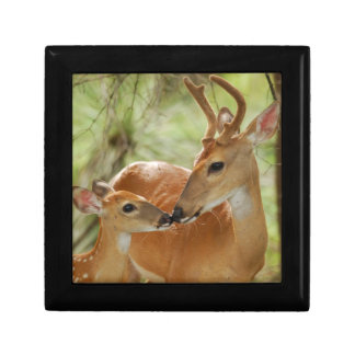 Whitetail Buck And Fawn Bonding Gift Box