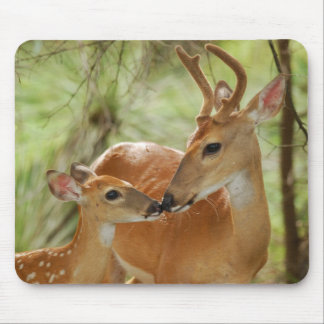Whitetail Buck And Fawn Bonding Mouse Pad
