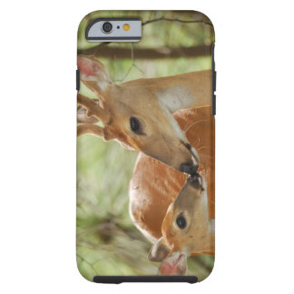 Whitetail Buck And Fawn Bonding Tough iPhone 6 Case