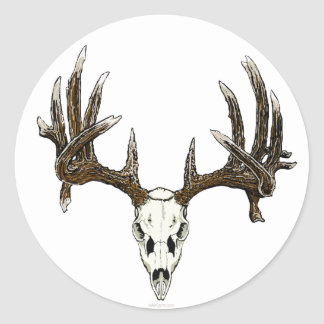 Whitetail buck skull round sticker