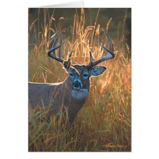 Whitetail Deer Card