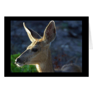 WhiteTail Deer Card