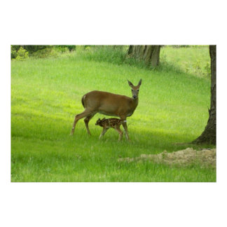 WhiteTail Deer (Doe and Fawn) Poster