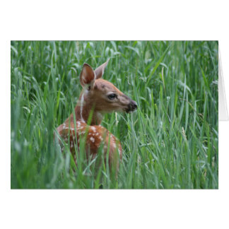 Whitetail Deer Fawn Card