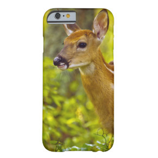 Whitetail deer fawn in Whitefish, Montana, USA Barely There iPhone 6 Case