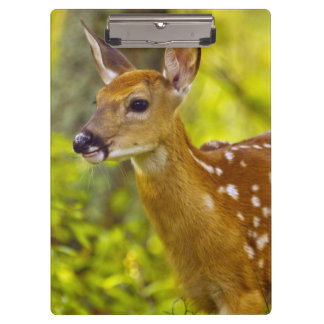 Whitetail deer fawn in Whitefish, Montana, USA Clipboards