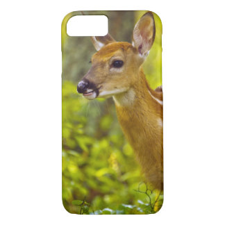 Whitetail deer fawn in Whitefish, Montana, USA iPhone 8/7 Case
