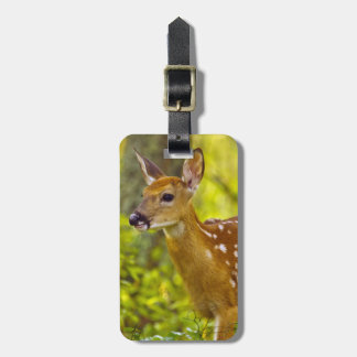 Whitetail deer fawn in Whitefish, Montana, USA Luggage Tag