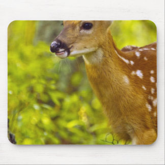 Whitetail deer fawn in Whitefish, Montana, USA Mouse Mat