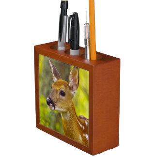 Whitetail deer fawn in Whitefish, Montana, USA Pencil Holder