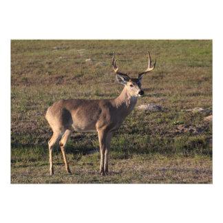 Whitetail Deer Invitations