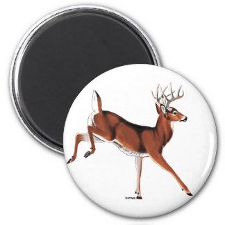 Whitetail Deer Magnet