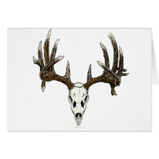 Whitetail deer skull 1 card