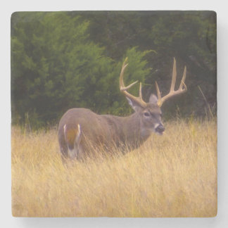 Whitetail Deer Stone Coaster