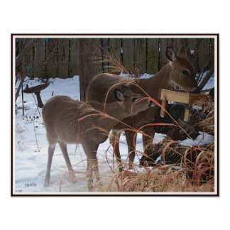 Whitetail Doe and Fawn Deer Value Poster Paper