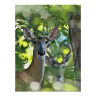 Whitetail Doe #Photobomb by Creepy Deer Poster