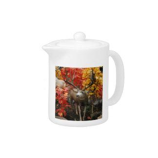Whitetail In Autumn