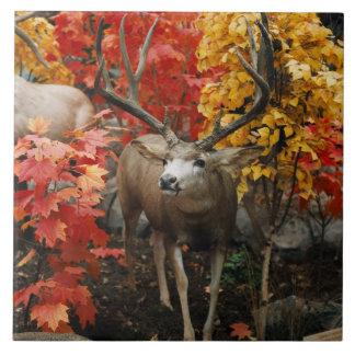 Whitetail In Autumn Tile