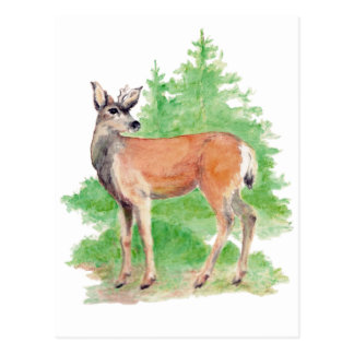 Whitetailed Deer Postcard