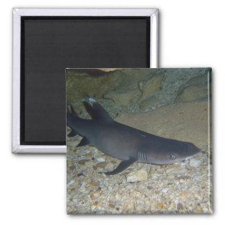 Whitetip Reef Shark Magnet