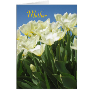 whitetulips, Mother Card
