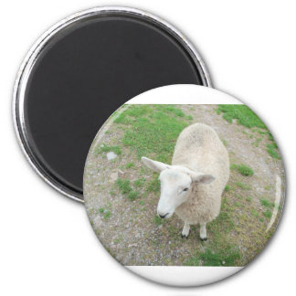 Who Are Ewe Looking At? 6 Cm Round Magnet