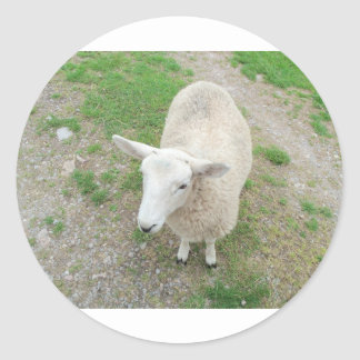 Who Are Ewe Looking At? Round Sticker
