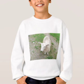 Who Are Ewe Looking At? Sweatshirt