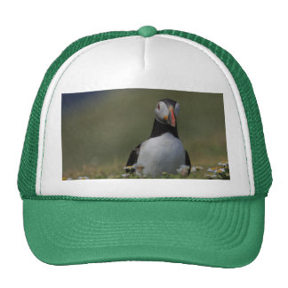 Who Are You Puffin Hat