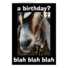 """WHO"" CARES ""I CARE"" THE GOAT SAYS HAPPY BIRTHDAY CARD"