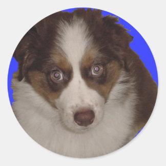 Who me? Red Tri Aussie Puppy Round Sticker