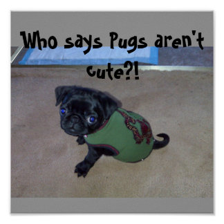Who says Pugs aren't cute?! - Customized Poster