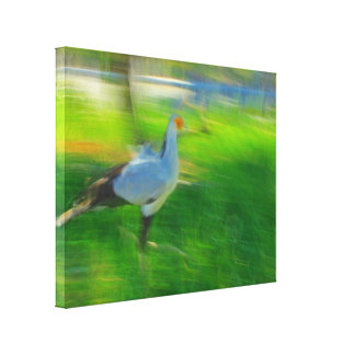 Whoa Bird! Stretched Canvas Prints