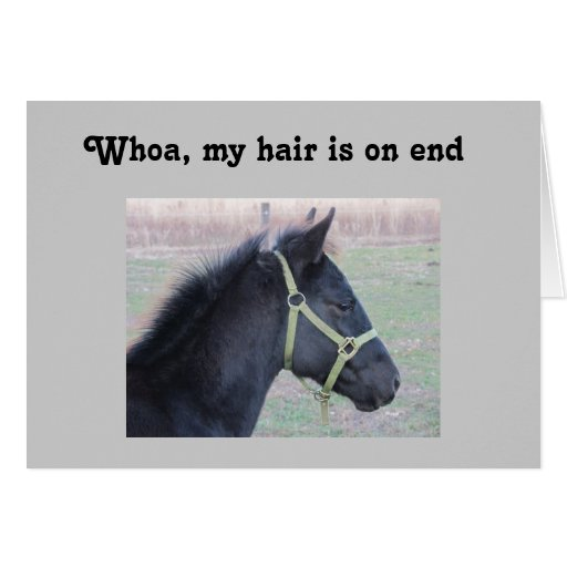 WHOA, MY HAIR IS ON END - 40TH BIRTHDAY GREETING CARDS