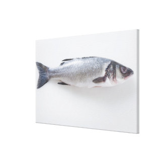 Whole branzini fish canvas print