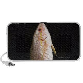 Whole Sea Bass Speakers