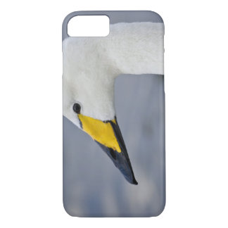 Whooper Swan at a pond in Reykjavik, Iceland. iPhone 8/7 Case