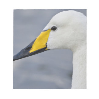 Whooper Swan at a pond in Reykjavik, Iceland. Notepad