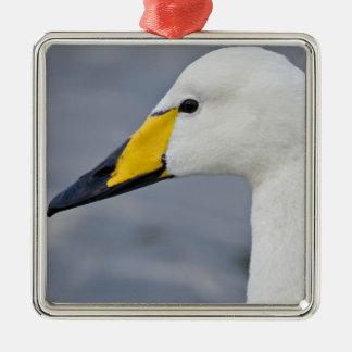 Whooper Swan at a pond in Reykjavik, Iceland. Silver-Colored Square Decoration