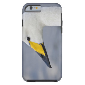 Whooper Swan at a pond in Reykjavik, Iceland. Tough iPhone 6 Case