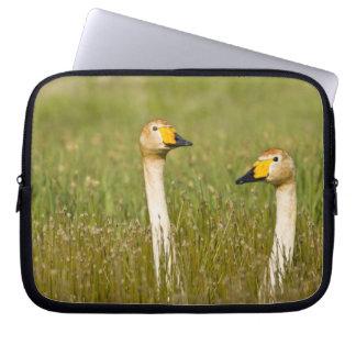 Whooper swan pair in Iceland. Laptop Sleeve