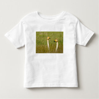 Whooper swan pair in Iceland. Toddler T-Shirt
