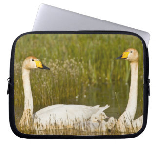 Whooper swan pair with cygnets in Iceland. Laptop Sleeve