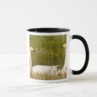 Whooper swan pair with cygnets in Iceland. Mug