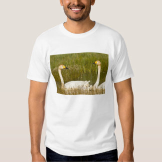 Whooper swan pair with cygnets in Iceland. T Shirt