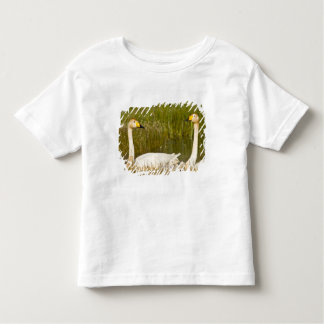 Whooper swan pair with cygnets in Iceland. T-shirts