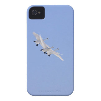 Whooper Swans flying in the sky Case-Mate iPhone 4 Cases