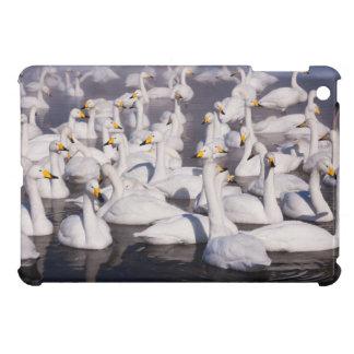 Whooper Swans, Hokkaido, Japan Cover For The iPad Mini