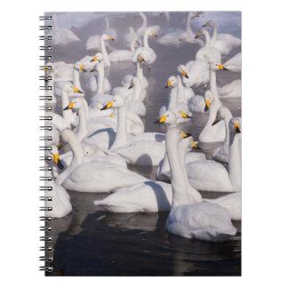 Whooper Swans, Hokkaido, Japan Spiral Notebook
