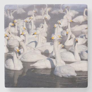 Whooper Swans, Hokkaido, Japan Stone Coaster